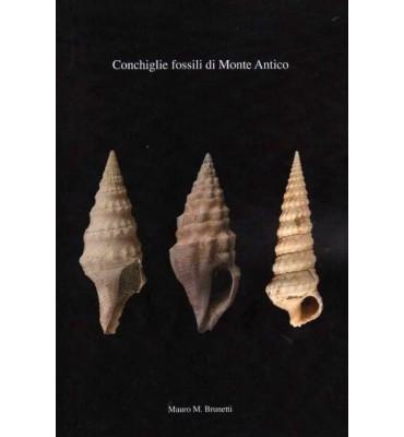 Conchiglie fossili di Monte Antico