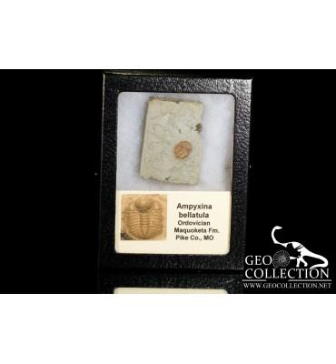 Stromatolite fossile Australia - Banded Tiger Iron