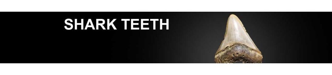 Denti di Squalo