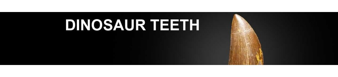 Denti di Dinosauro