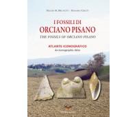 I Fossili di Orciano Pisano.