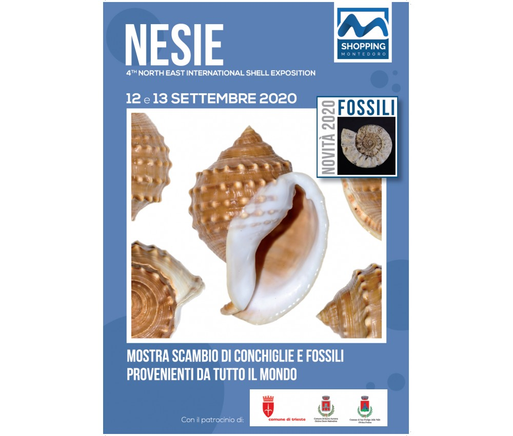 4th NESIE SHELL SHOW 12 and 13 September 2020