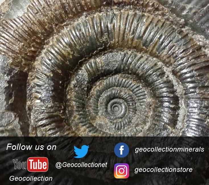 Follow us on Facebook, Twitter, Instagram e Youtube